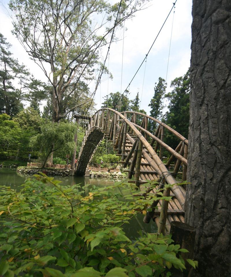 溪頭森林生態之旅